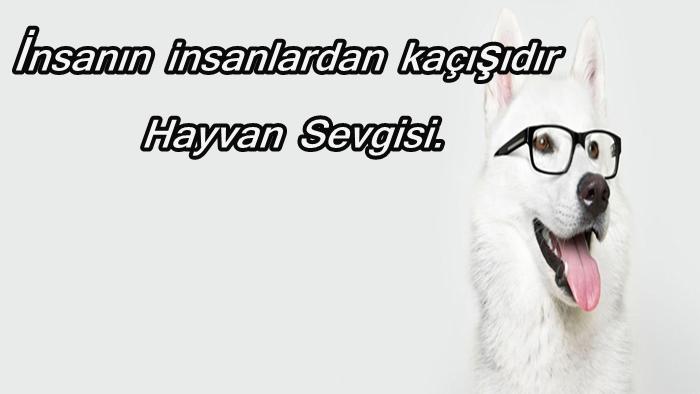 Photo of Hayvan Sevgisi Sözleri