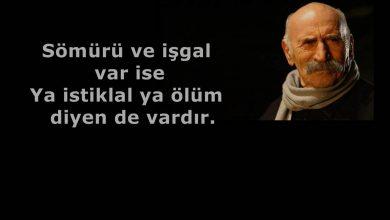 Photo of Tuncel Kurtiz Sözleri